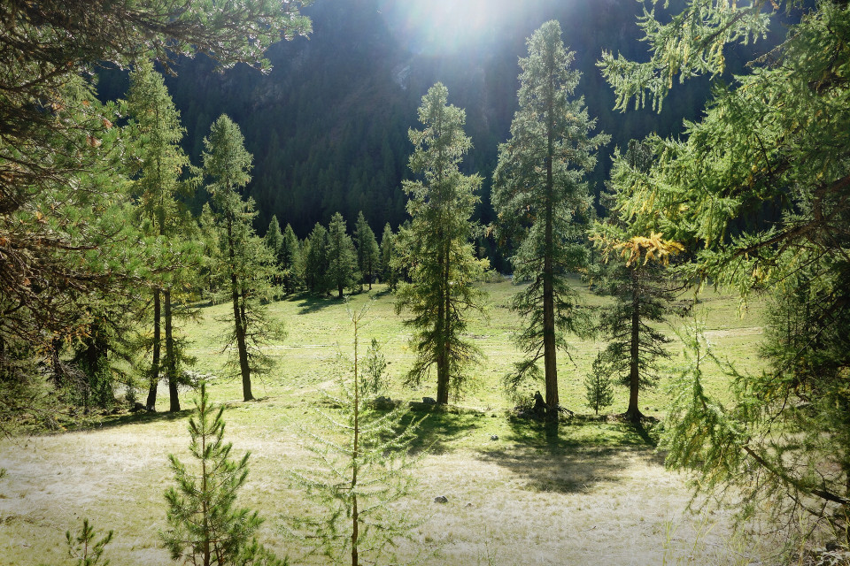 Swiss Nature ~ Just light edited because....I have no idea how I could edit it :'D #freetoedit I wish you a nice day :) ~  #photography #naturephotography #forest #sun #beautifypicsart #nature #landscape #switzerland
