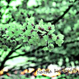 colorswap cherryblossoms