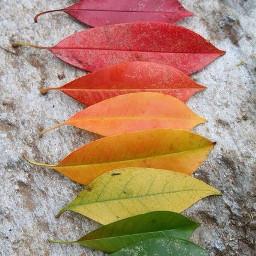 art beautiful light leaves october2015
