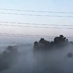 interesting fog romanticism sublime trees