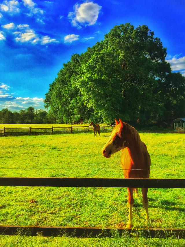 #horse #petsandanimals #nature #freetoedit #cute #luxxxs