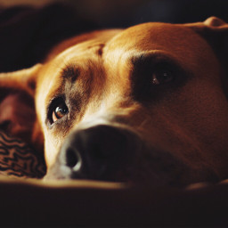 dog lovely cute interesting photography