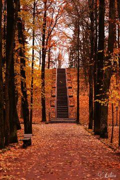 nature autumn freetoedit interesting dpcstairs