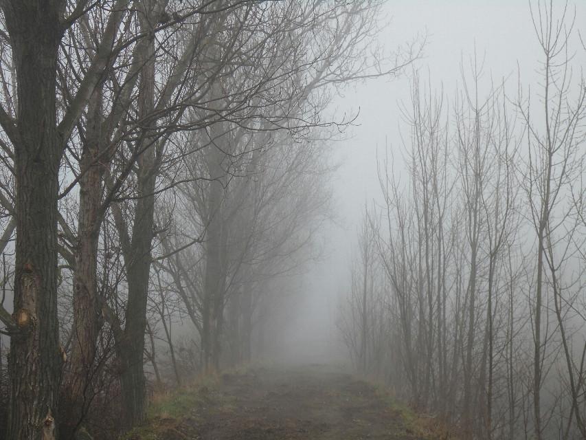 #fog  #tree