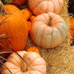 halloween pumpkin orange nature love