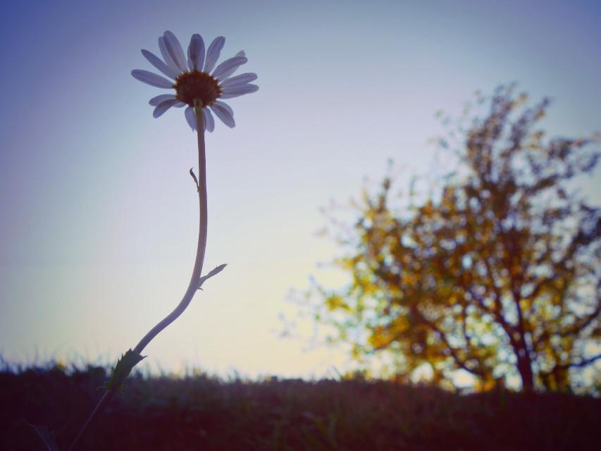 Beautiful Nature ~   #photography #swiss #nature #switzerland #naturephotography #flower #landscape #hdr #macro
