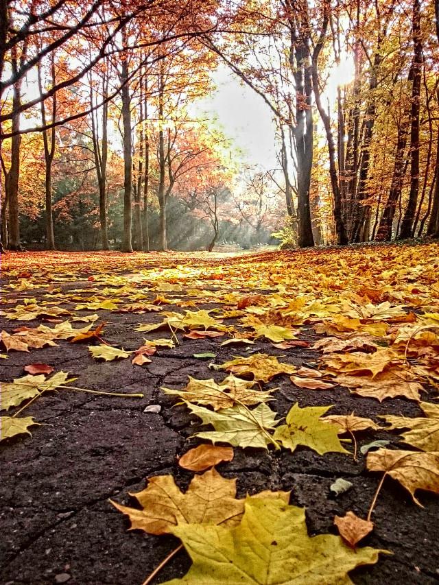 #photography   #nature #jesień