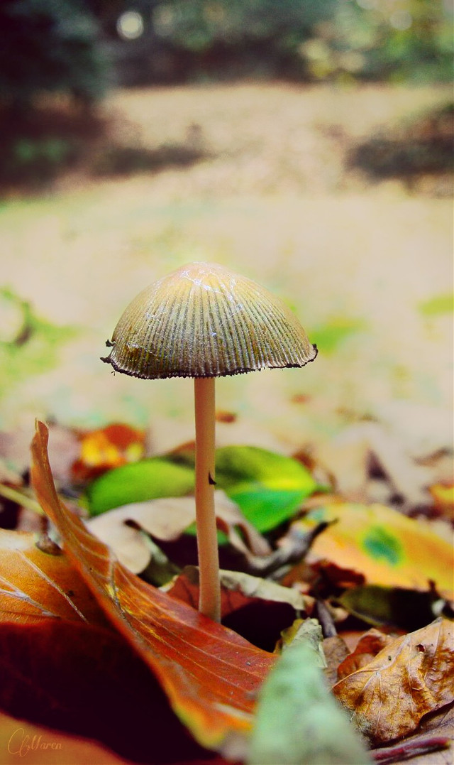 #mushroom #woods  #nature #photography #autmn