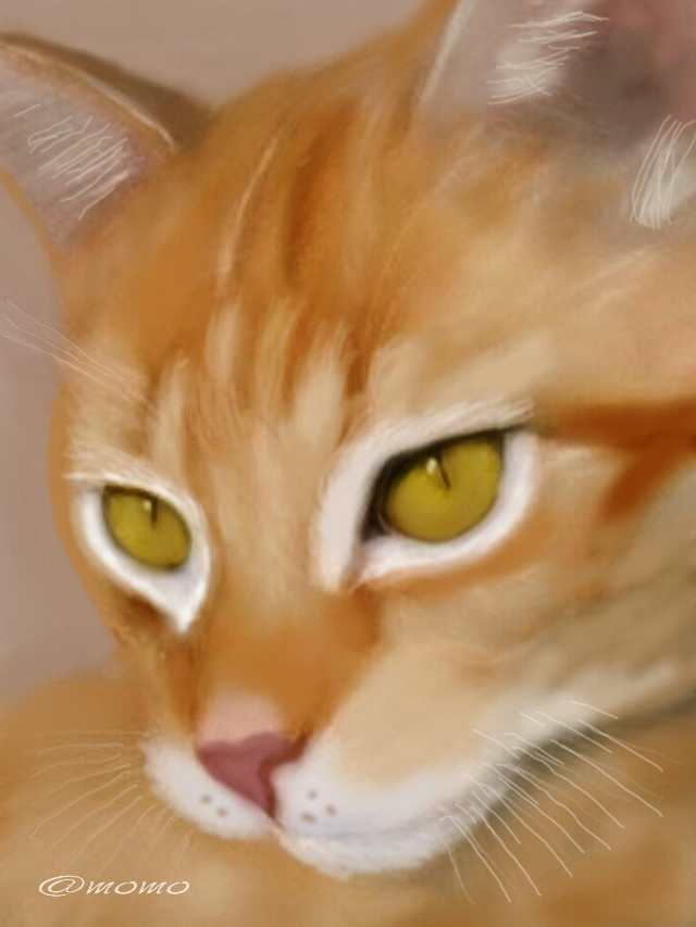 #WDPeyes #drawing #eyes #cat #emotions