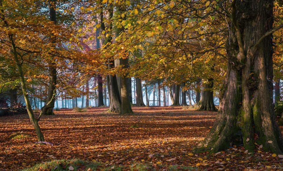 Autumn at Longshaw, a simple composition #photography #picsart #autumn #leaves #autumnleaves #tree #nature #landscape #landscapephotography #woodland #peakdistrict #derbyshire #england #nikon #freetoedit #orange