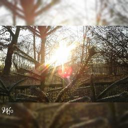sun autumn