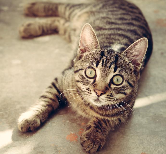 @o27 #CAT***** #CUTE***** #PET***** #FELİNE***** #KİTTY*****