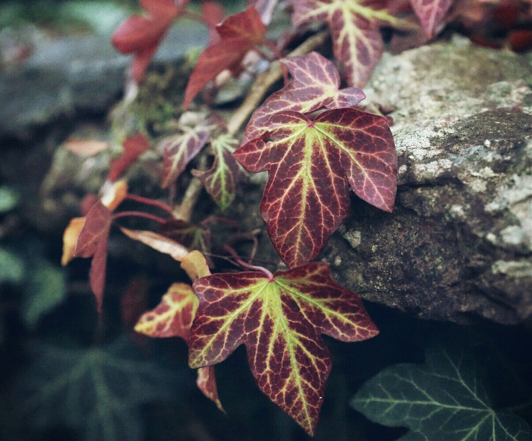#photography #nature #leafs