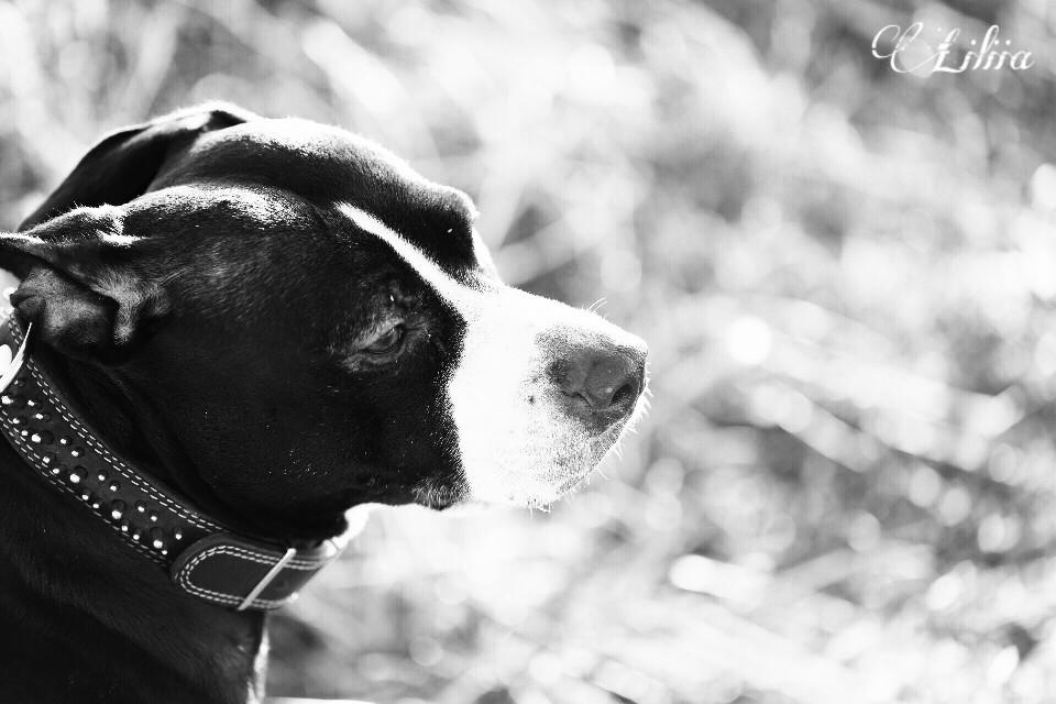 Good  evening dear friends😉❤️ #blackandwhite #dog #freetoedit