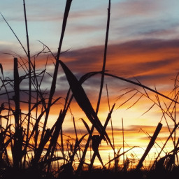 sunset sunrise sun nature