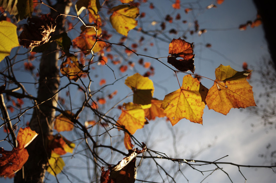 Filtering Light #nature  #colorful  #leaf #fall #tr #travel #ozarks #missouri  #sky #blue #photography  #artistic #freetoedit