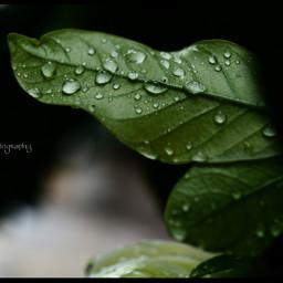 rain photography green water freetoedit