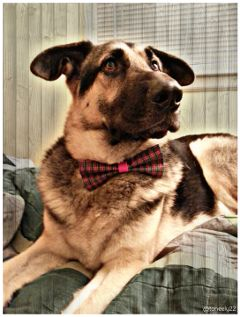 barkybows dog petsandanimals puppy