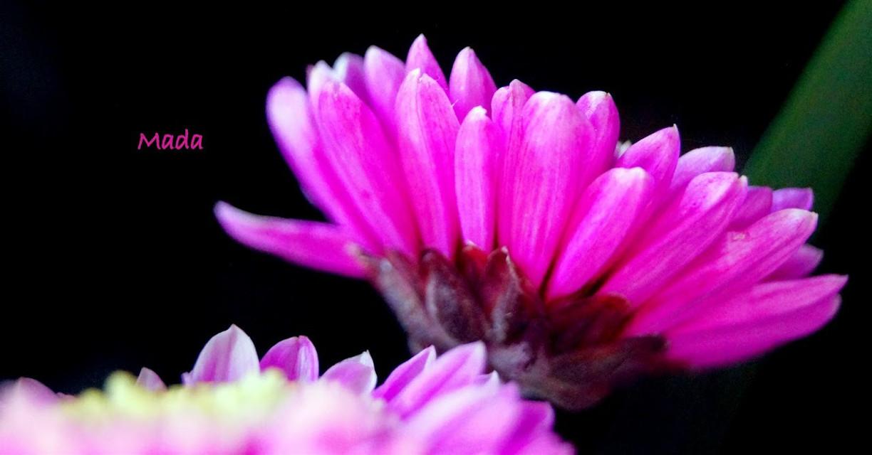 #colorful #flower #oldphoto #nature #photography #beautiful #summer #petals  #pink #beautiful #followme