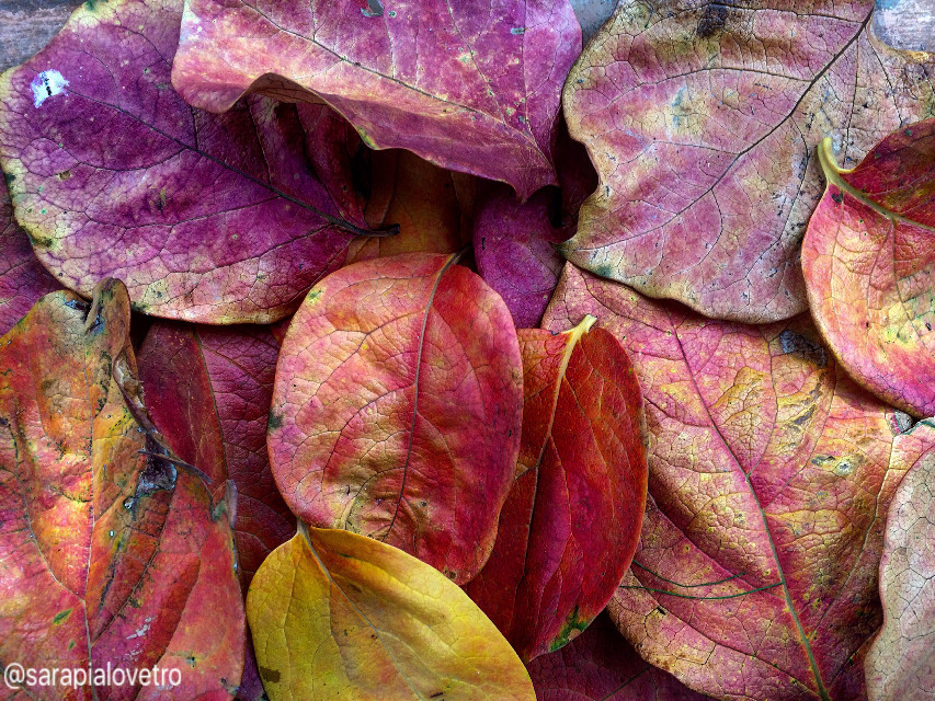 #nature #leaves #winter #beautiful #art #italy #photography #colorsplash #iphone