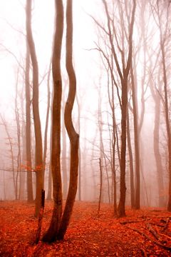 picsart trees fog nature mountain