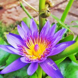 myflower myshot nature colorful love