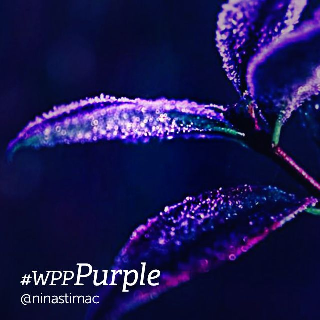 purple color photography
