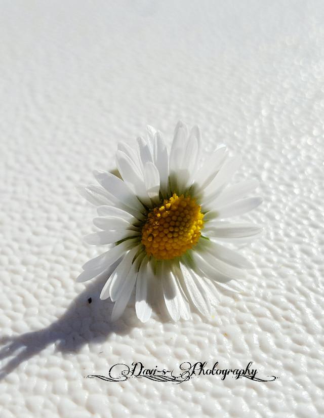 #whiteonwhite #photography #freetoedit #nature #flower #emotions  #whiteandwhite Happy Saturday!