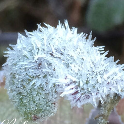 photography nature frozen leaf beautiful
