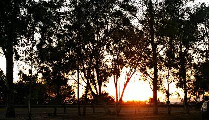 sunset januarysun sky tree red