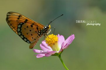 flower nature butterfly photography