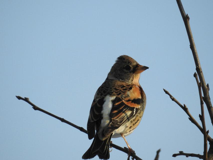 Finch. #nature  #bird