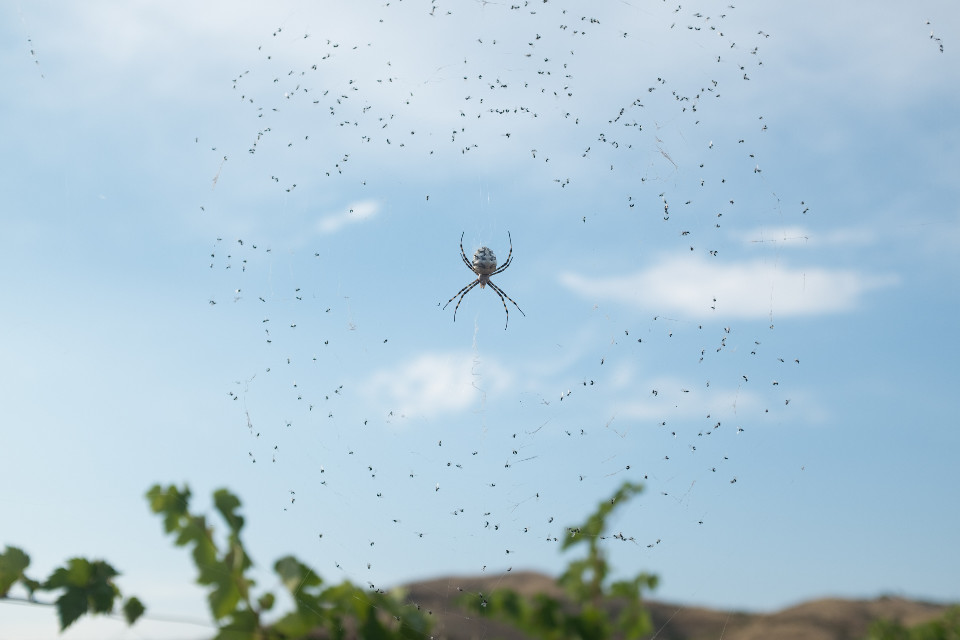 #freetoedit  #spider #nature  #fly