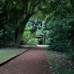 mystic enchanted forest magic garden