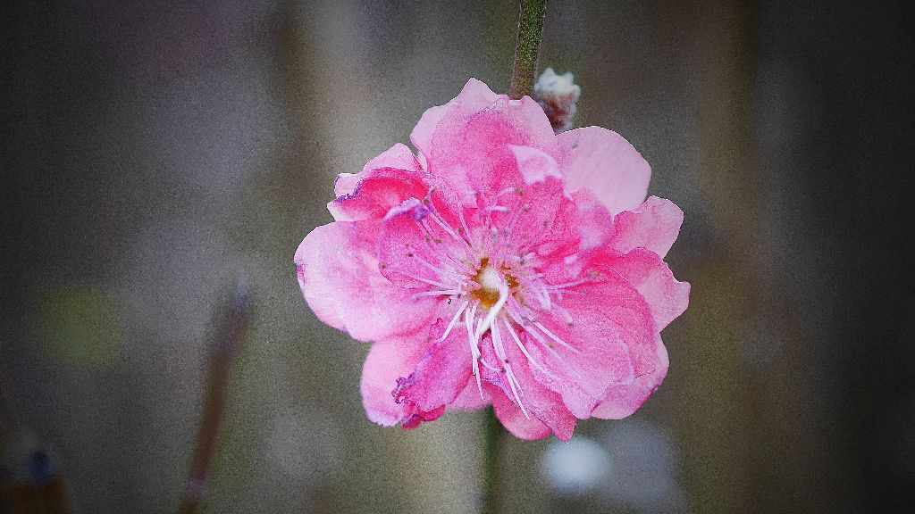 #flower #nature #photography #spring #blossom