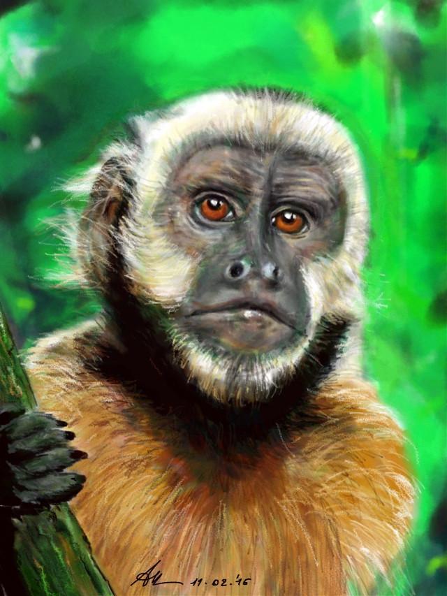 #wdpyearofthemonkey #drawing #animals #monkey  Watch the video :  http://youtu.be/d6mMYI4KwwY