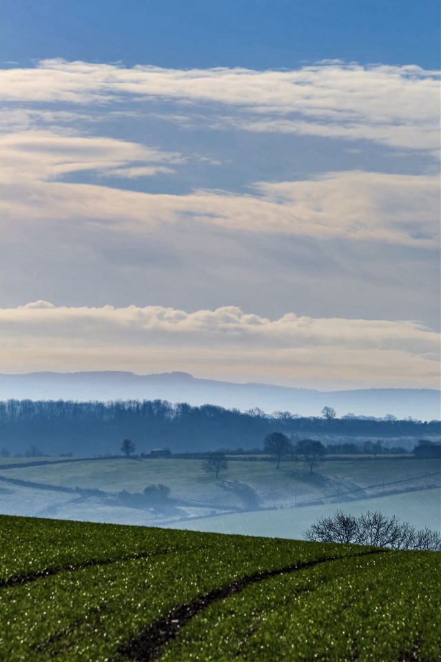 The crops are beginning to grow. #misty #hills #fields #somersetengland
