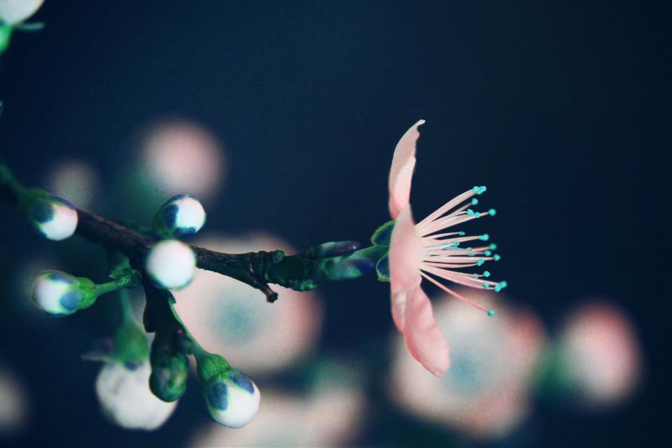 #nature #flower  #blossoms #outandabout #adjusttool #hue #dodger #photography