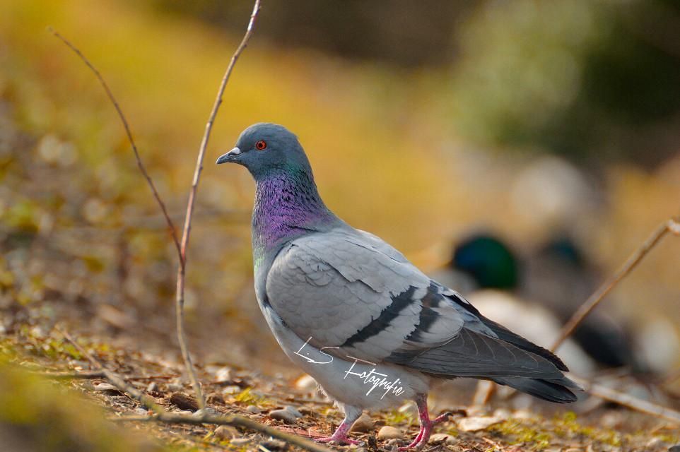 #bird #petsandanimals #nature #photography #Nikonfotografie #cute