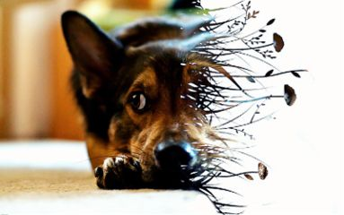 freetoedit warp crisp dog nature