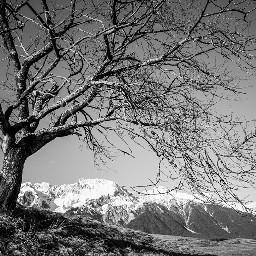 blackandwhite nature spring travel wood