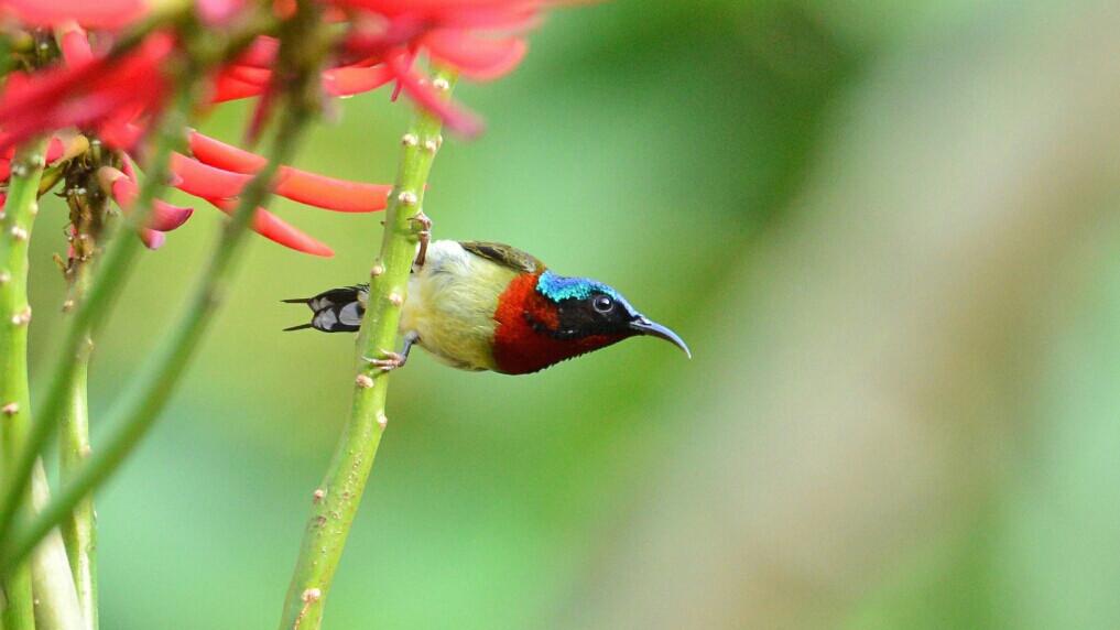 #nature #spring #travel  #birds