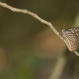 little photography macro love butterfly