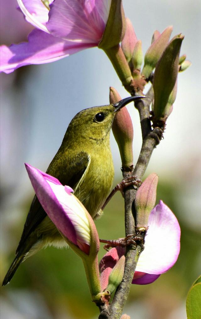 美麗的小妹妹 ! #nature #flowers #bird #写真