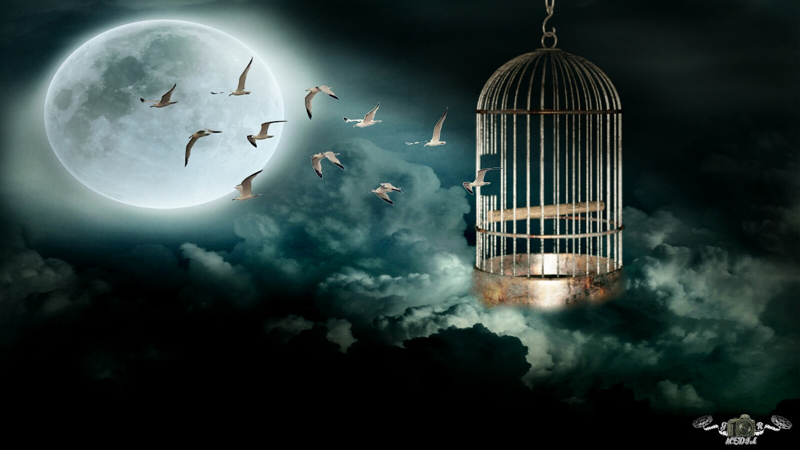 The bird cage escape #nature  #clouds #moon #birds #cage