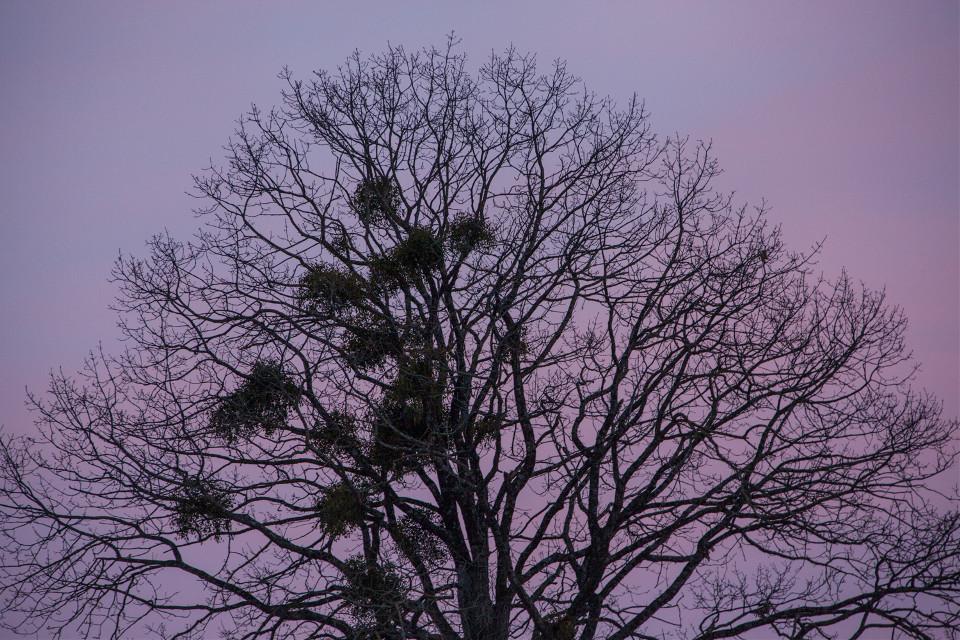 #freetoedit  #tree #omella #sunset