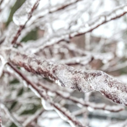 freetoedit photography nature ice branch