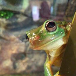 photography petsandanimals nature frog klmphotography