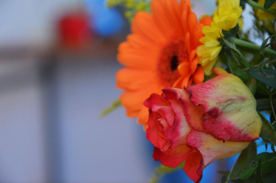 #FreeToEdit  #colorful #colorsplash #flower #nature #spring