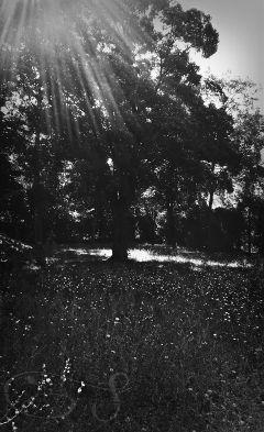 park blackandwhite tree summer flowers